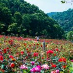 Парк Роз Поездка в горы и озеро Мулань из Уханя
