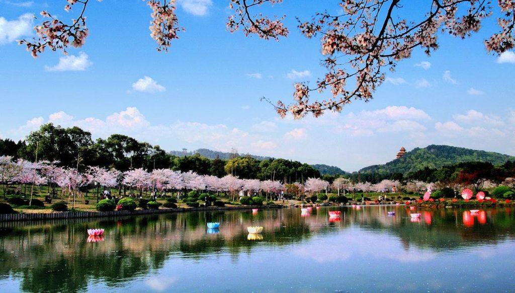 东湖磨山樱园