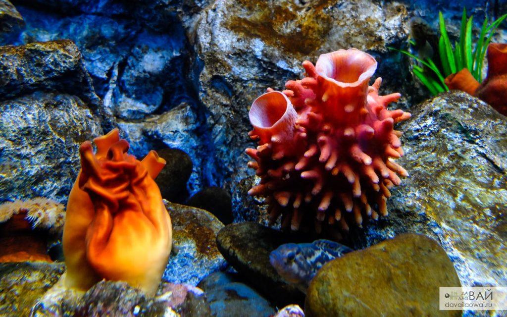морское сердце приморский океанариум