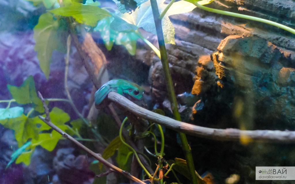 жаба австралийская приморский океанариум