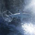акула в приморье океанариум