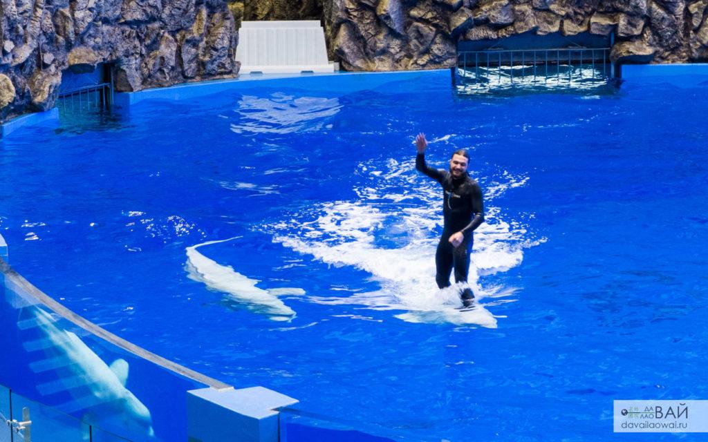 серфинг на дельфине приморский океанариум