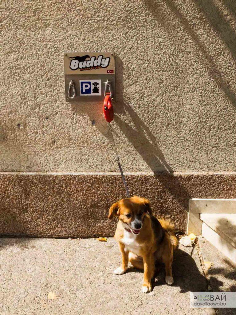 парковка для собак черногория