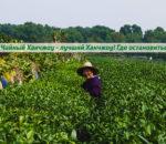 Дешевый и уютный отдых в Ханчжоу около чайных плантаций. Где и сколько?