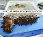 ferma-grebeshkov-vladivostok