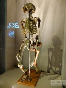 скелет Люси шанхай world expo museum