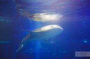 акула Океанариум Каюкан