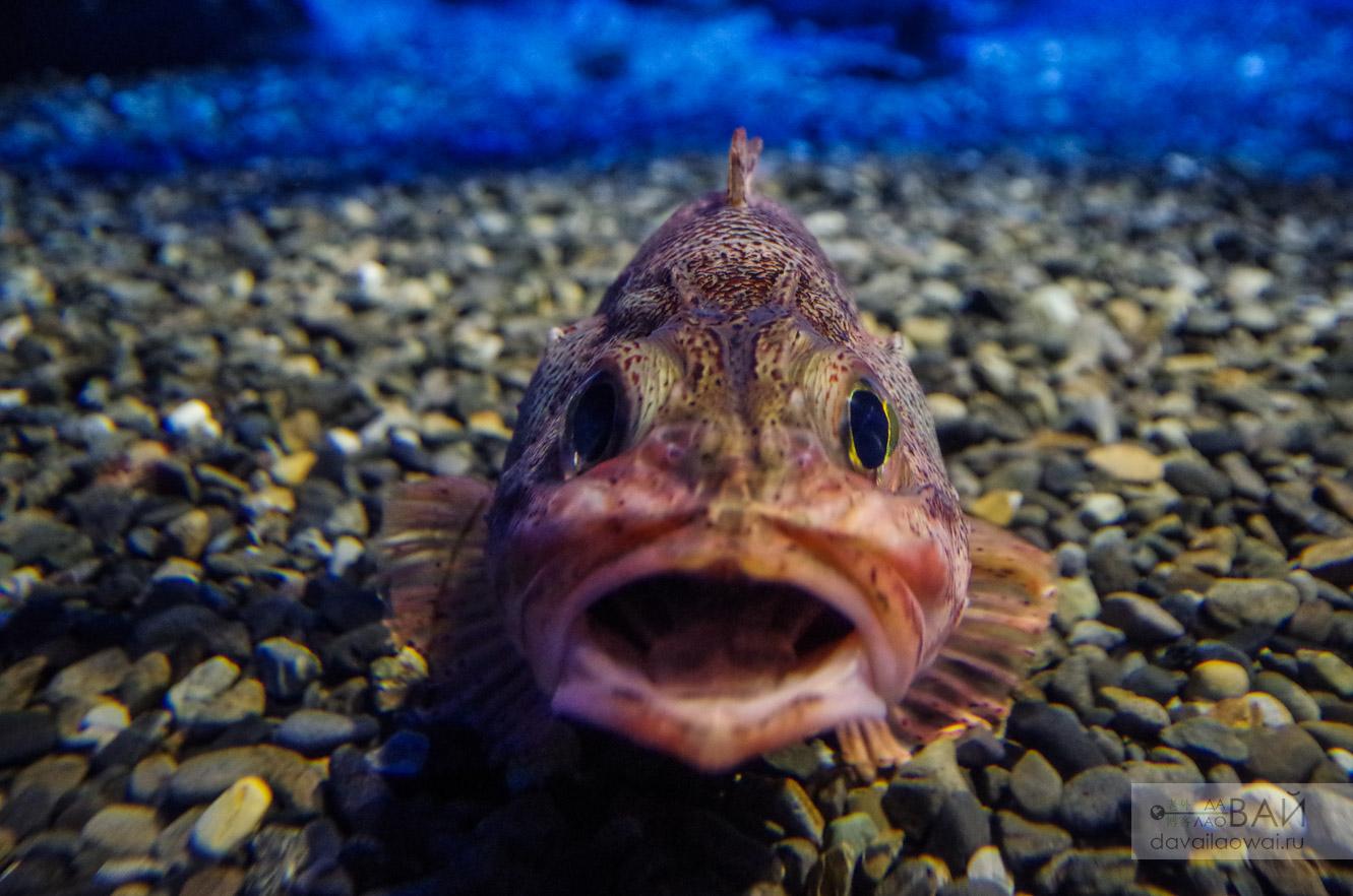 рыбы в Океанариум Каюкан