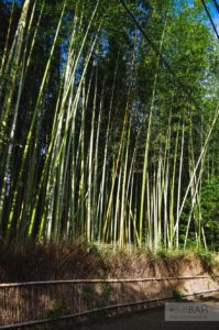 Бамбуковый лес Киото - Kameyama Park 亀山公園