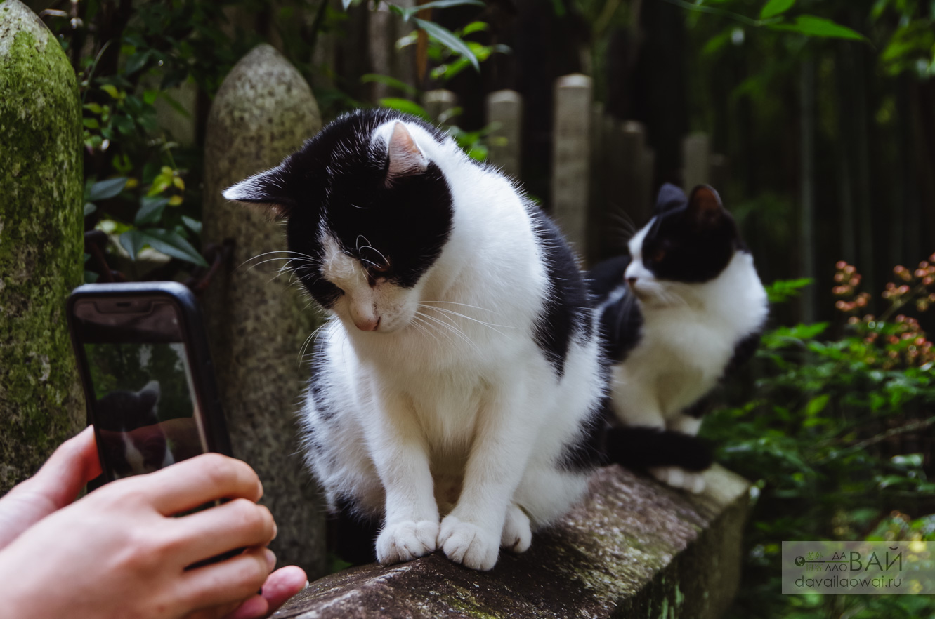 коты в храме фусими инари
