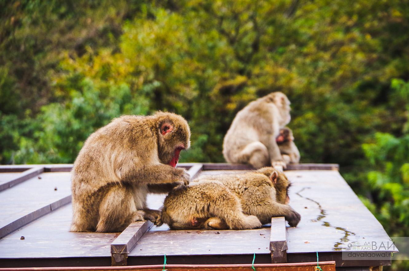 Парк обезьян киото Arashiyama Monkey Park Iwatayama