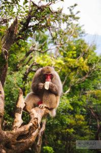 Парк обезьян - Arashiyama Monkey Park Iwatayama