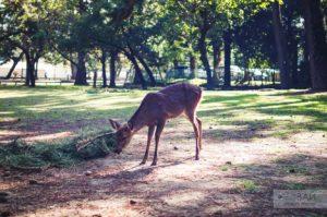 олени в парке нары