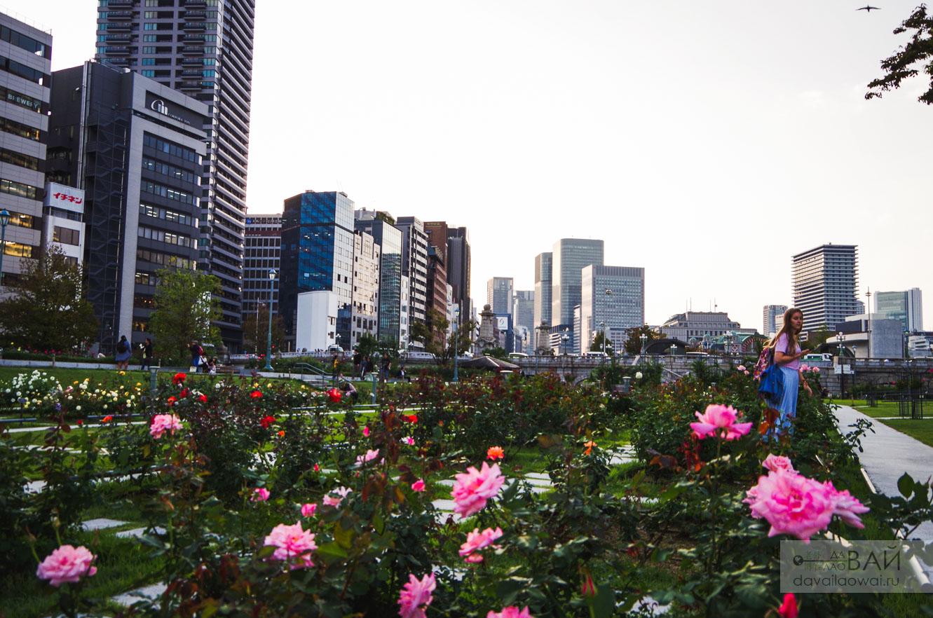парк роз в осаке